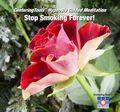 Stop_Smoking_Forever